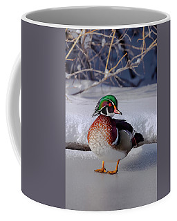 Wood Duck In Winter Snow And Ice, Montana, Usa Coffee Mug