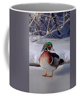 Wood Duck In Winter Snow And Ice, Montana, Usa Coffee Mug
