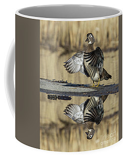 Coffee Mug featuring the photograph Wood Duck Reflection by Mircea Costina Photography