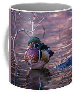 Wood Duck Resting Coffee Mug
