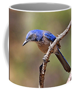 Woodhouse's Scrub-jay Coffee Mug