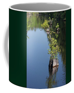 Yawkey Wildlife Refuge - Cat Island Coffee Mug by Suzanne Gaff