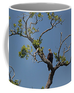 Yawkey Wildlife Reguge - American Bald Eagle Coffee Mug by Suzanne Gaff