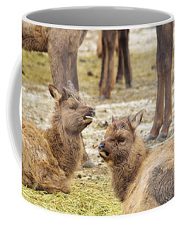 Coffee Mug featuring the photograph Yearlings by Jeff Swan