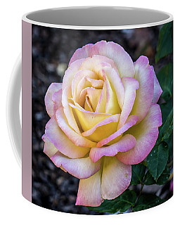Coffee Mug featuring the photograph Yellow And Pink Rose by Jane Luxton