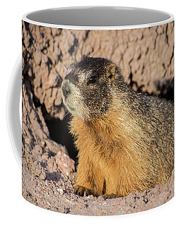 Yellow-bellied Marmot - Capitol Reef National Park Coffee Mug