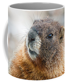 Yellow Bellied Marmot Close Up Coffee Mug