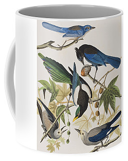 Yellow-billed Magpie Stellers Jay Ultramarine Jay Clark's Crow Coffee Mug