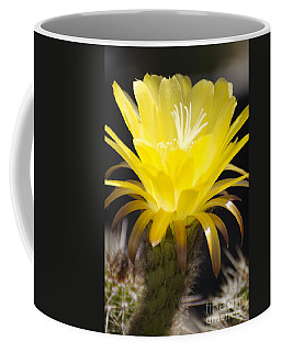 Yellow Cactus Flower Coffee Mug