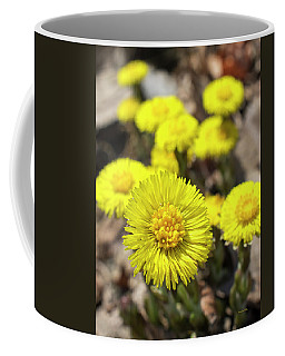 Coffee Mug featuring the photograph Yellow Coltsfoot Flowers by Christina Rollo