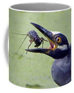 Coffee Mug featuring the photograph Yellow Crowned Night Heron  by Savannah Gibbs