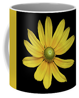 Yellow Eyed Daisy In Black Coffee Mug