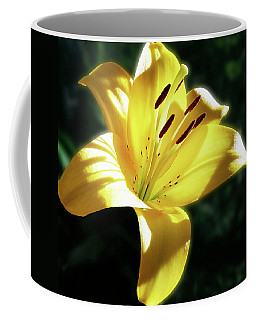 Yellow Lily In Sunlight Coffee Mug