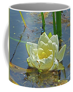 Yellow Nymphaea Alba Damselfy Coffee Mug