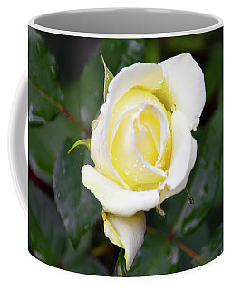 Yellow Rose 1 Coffee Mug