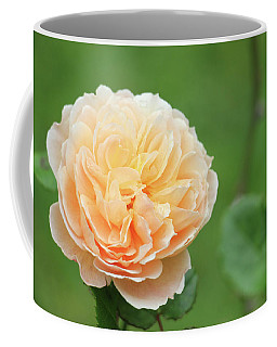 Coffee Mug featuring the photograph Yellow Rose In December by Kelly Hazel