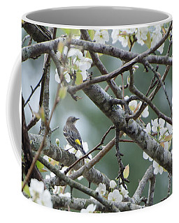 Yellow-rumped Warbler In Pear Tree Coffee Mug