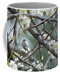 Yellow-rumped Warbler In Pear Tree Coffee Mug