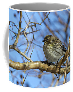 Yellow-rumped Warbler Perched Coffee Mug