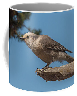 Yellowstone Grey Jay Coffee Mug