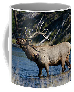 Yellowstone Park Elk Coffee Mug by Greg Sigrist