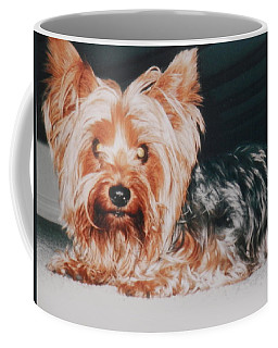 Coffee Mug featuring the photograph Yorkie In Hiding by Belinda Lee