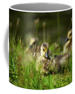Coffee Mug featuring the photograph Young And Adorable by Karol Livote