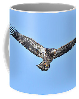 Young Bald Eagle Coffee Mug
