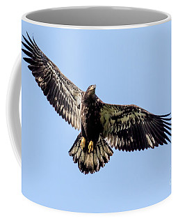 Young Bald Eagle Flight Coffee Mug