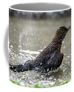 Coffee Mug featuring the photograph Young Blackbird's Bath by Torbjorn Swenelius