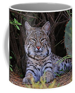 Young Bobcat Coffee Mug