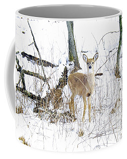 Young Doe And Spring Snow Coffee Mug