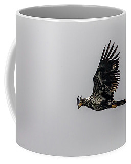 Young Eagle In Flight 07 Coffee Mug