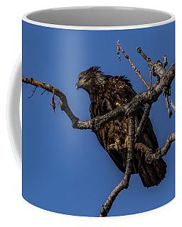 Young Eagle Coffee Mug by Ray Congrove