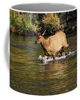 Young Elk Crossing River Coffee Mug