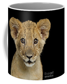Young Lion Coffee Mug