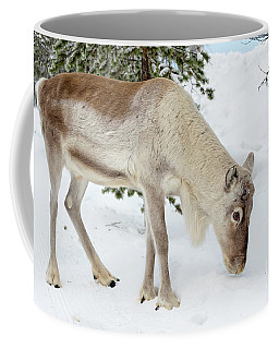 Coffee Mug featuring the photograph Young Rudolf by Delphimages Photo Creations
