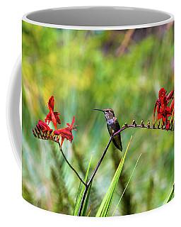 Young Rufous Hummingbird Perched On Flower Coffee Mug