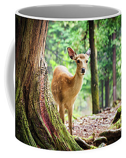 Young Sika Deer In Nara Park Coffee Mug