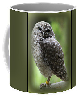 Young Snowy Owl Coffee Mug