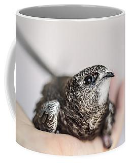 Young Swift Coffee Mug