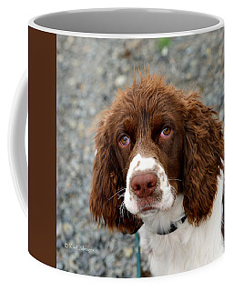 Young Water Spaniel Coffee Mug by Kae Cheatham