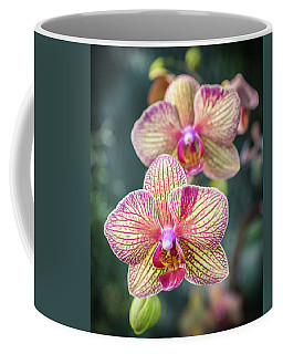 Coffee Mug featuring the photograph You're So Vain by Bill Pevlor