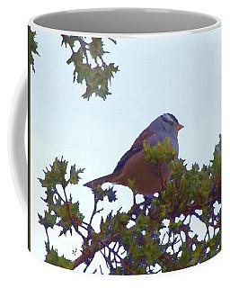 White Crowned Sparrow In Cedar Coffee Mug