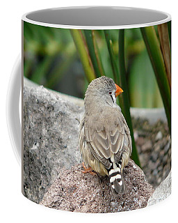 Zebra Finch Coffee Mug