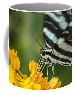 Zebra Swallowtail Drinking On The Fly Coffee Mug