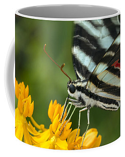 Zebra Swallowtail Drinking On The Fly Coffee Mug