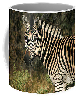 Zebra Watching Coffee Mug