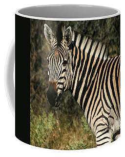Zebra Watching Sq Coffee Mug