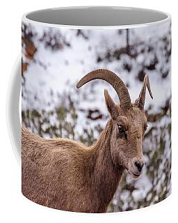 Zion Bighorn Sheep Close-up Coffee Mug